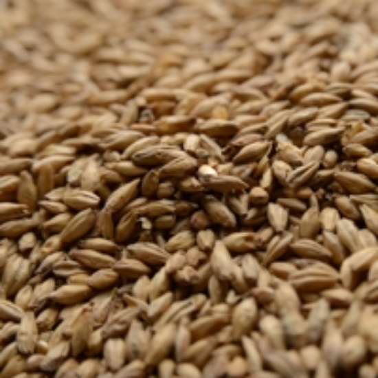 Picture of Briess Brewers Malt 50 lb
