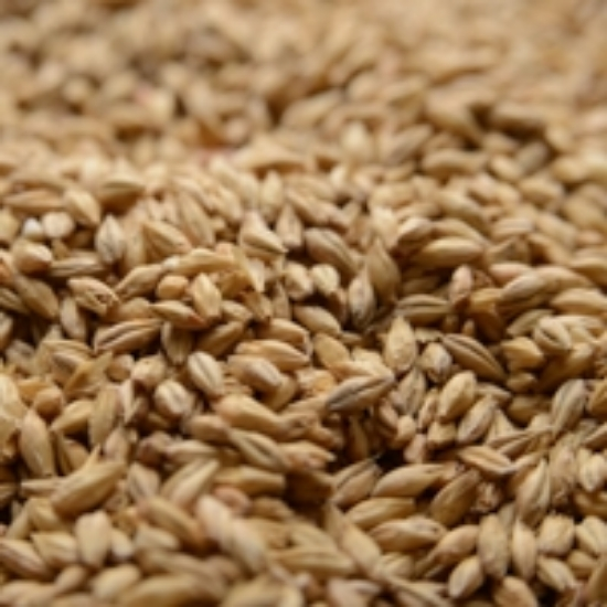 Picture of Briess Pale Ale 50 lb