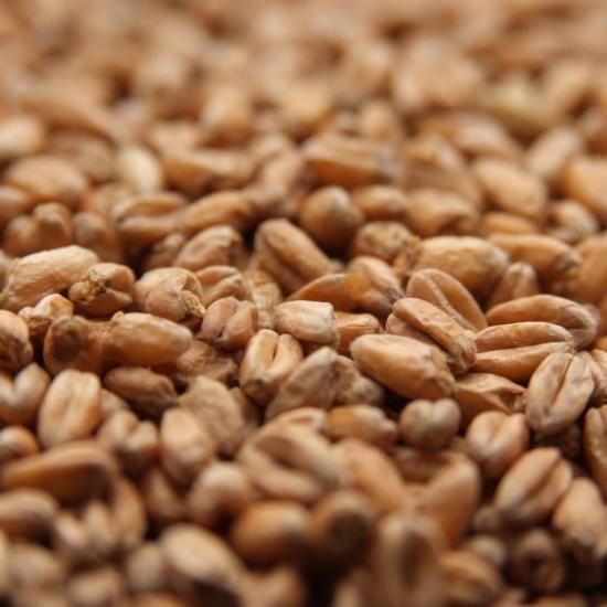Picture of Weyermann® Oak Smoked Wheat 25 kg (55 lb)
