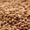 Picture of Weyermann® Pale Wheat 10 lb