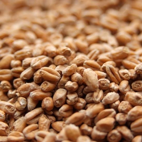 Picture of Weyermann® Pale Wheat 25 kg (55 lb)