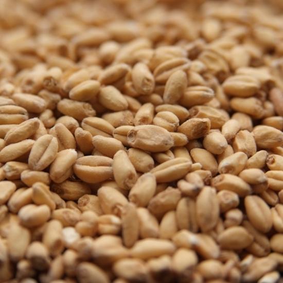 Picture of Rahr White Wheat 55 lb (25 kg)