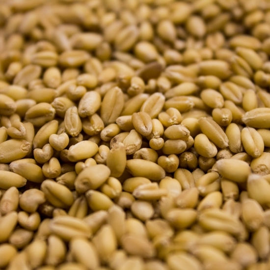 Picture of Rahr Unmalted Wheat 55 lb (25 kg)