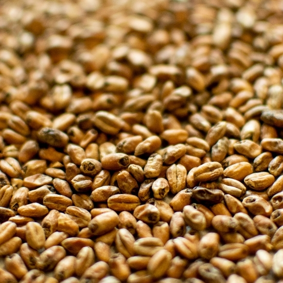 Picture of Dingemans Toasted Wheat 25 kg (55 lb)